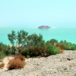 Coast of the Dead Sea. Israel — Stock Photo