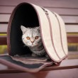 Cat in pet carrier — Stock Photo #13354694