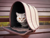 Cat in pet carrier — Stock Photo