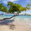 Hammock on the beach, Thailand, Ko Phi Phi — Stock Photo #22051273