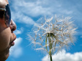 Blowing dandelion — Stock Photo