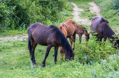 Four horses grazing in the mountains — Stock Photo