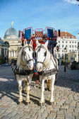 Two horses harnessed to the carriage — ストック写真