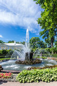 View on fountain in Peterhof — Stock Photo
