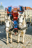 Two horses harnessed to the carriage — Stock Photo