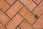 Red bricks background with a small bunch of green grass — Stock Photo