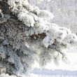 Spruce branches covered with snow, Branch of fir tree in snow, background — Stock Photo #35811793