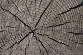 Old tree cracked and splitted trunk background — Stock Photo
