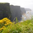 Cliffs of Moher — Stock Photo #13495249