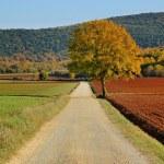 Lonely beautiful autumn tree — Stock Photo #19634821