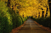 Herbstliche Pfad — Stockfoto