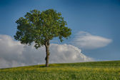 Lone Tree — Stock Photo