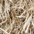 Background of straw — Stock Photo #22493011