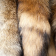 Stock Photo: Fox tails