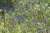 Wild spring meadow flowers — Stock Photo