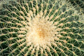Round spiny cactus — Stock Photo