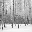 Stock Photo: Winter wood.