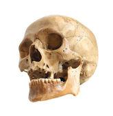 Cráneo humano. — Foto de Stock