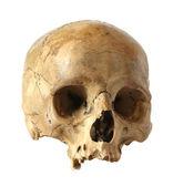 Human skull. — Stock Photo