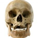 Human skull. — Stock Photo #21068345