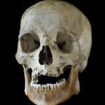 Skull. — Stock Photo #26489897