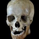 Human skull. — Stock Photo #29436643