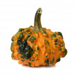 Stock Photo: Cucurbita.