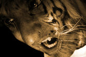 Tiger Monster — Stock Photo