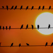 School of Sunset Birds — Stock Photo