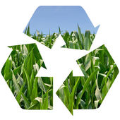 Recycle Symbol of a Field of Corn — Stock Photo
