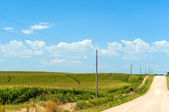 Country Road Next to Cornfield — Stock Photo