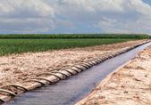 Siphon Tube Irrigated Cornfield — Stock Photo