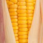 Corn in cob — Stock Photo #13121801