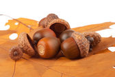 Bunch of acorns — Stock Photo