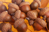 Bunch of acorns — Stock Photo