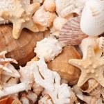 Sea shells background — Stock Photo #13637987