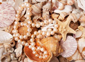 Pearl nacklace on a sea shell background — Stock Photo