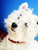 Dog party — Stock Photo