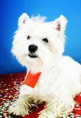 Festa del cane — Foto Stock