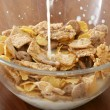 Corn flakes — Stock Photo