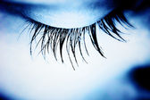 Great eye - MACRO — Stock Photo