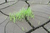 Green grass over cracked terrain texture — Stock Photo