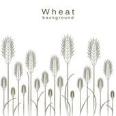 Wheat background — Stock Vector