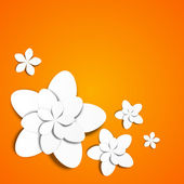 White paper flowers on orange — Stock Vector