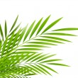 Palm leaves — Vector de stock #21815013