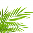 Palm leaves — Stock Vector