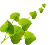 Grüne blätter hintergrund mit platz für text — Stockvektor