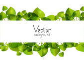 Green leaves background with place for text — Stock Vector