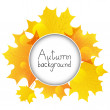 Autumn leaves with round frame — Stockvectorbeeld