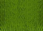 Grass textury — Stock vektor